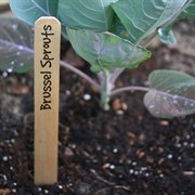 Wood Plant Marker - 4 inch