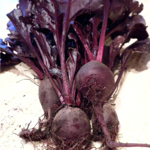 BEETS, Bull's Blood