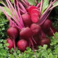 Blood Turnip Beet Seeds