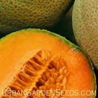 Crenshaw Cantaloupe Seeds