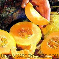 Minnesota Midget Cantaloupe Seeds