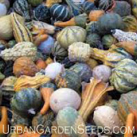 GOURD, Small & Large Mix