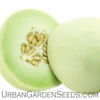 Rocky Ford Muskmelon Seed