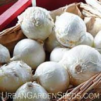 Spanish White Onion Seeds
