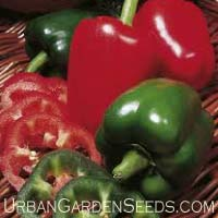 California Wonder Pepper Seeds
