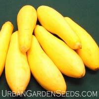 Saffron Squash Seeds