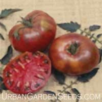 Cherokee Purple Tomato Seed