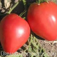Oxheart Tomato Seeds
