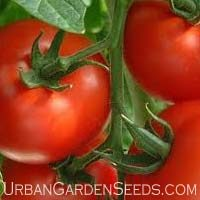 Rutgers Tomato Seeds