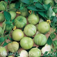 Tomatillo Verde Tomato