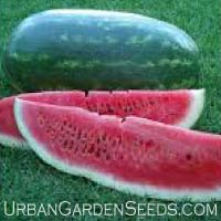 Black Diamond Watermelon Seeds